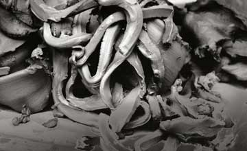 Art featuring snakes and chunks of grey clay.